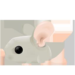 Mouse zodiac