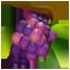 Grapes-64