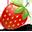 Strawberry-32