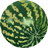 Water Melon-48