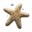 Sea Star icon