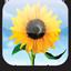 iPhone Wallpaper icon
