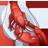 Lobster-48