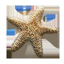 Sea Star-128