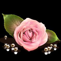 Rose-256