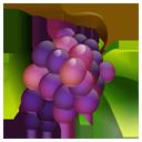 Grapes-128