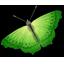 Butterfly-64