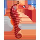 Seahorse-128