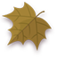 Autumn Leaf Icon