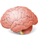 Brain-128