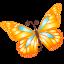 Butterfly Orange-64