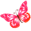 Butterfly Pink Icon